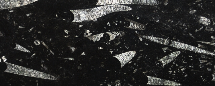 Мрамор Nero Fossil (Black Fossil)